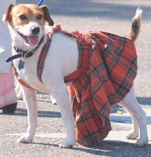 Scottish Highlands Festival